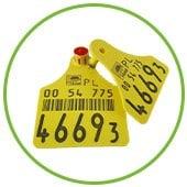 Żółte kolczyki dla bydła Can Agri.