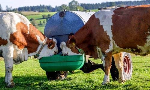 Poidło pastwiskowe dla krów Can Agri