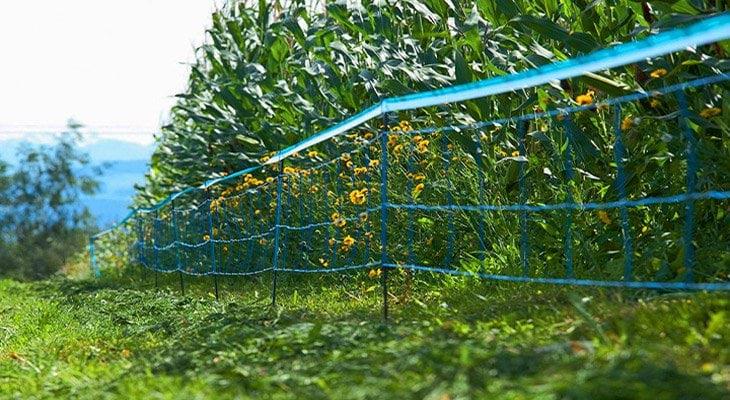 ochrona upraw przed dzikami, ogrodzenie elektryczne Can Agri, ogrodzenie na dziki